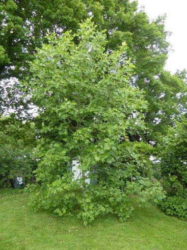 Encyclop die des plantes de notre jardin for Jardin l encyclopedie